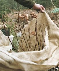 burlap plant covering