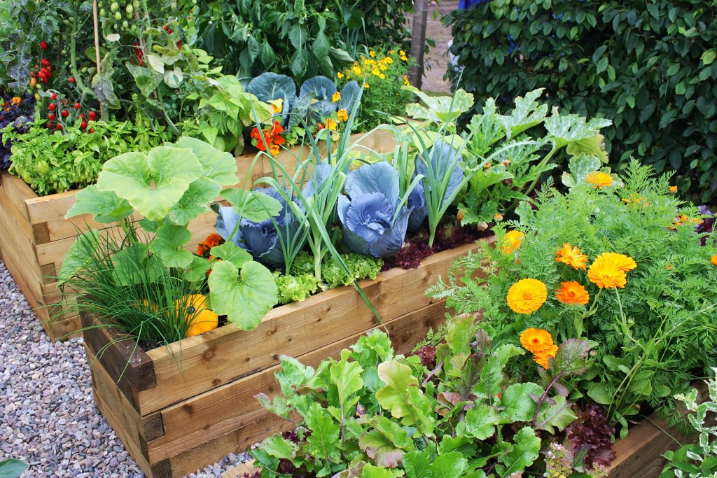 Tips for a Growing a Lush Organic Garden in Your Yard